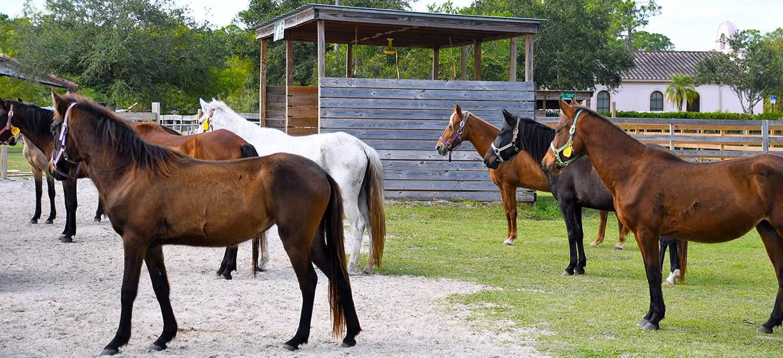 Equine Rescue Adoption Foundation Home